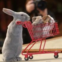 Comment faire les courses en paix avec les enfants