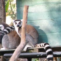Madagascar en famille